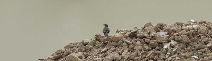 Vogel besucht den Spanischen Pavillon
